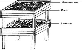 ящики для выращивания грибов